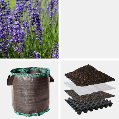 Fensterbeet Lavendel schwarz