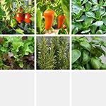 Pflanzen Set