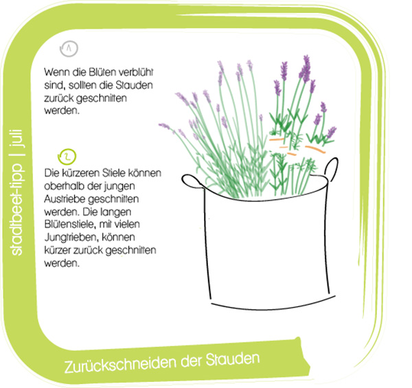 Stadtbeet_Illustration_juli Kopie