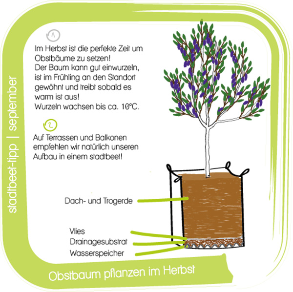 Stadtbeet_Illustration_sept Kopie