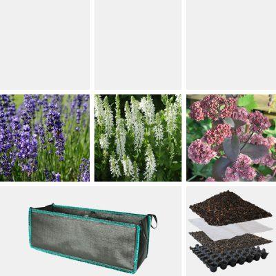 Lavendelbeet_Standard_schwarz